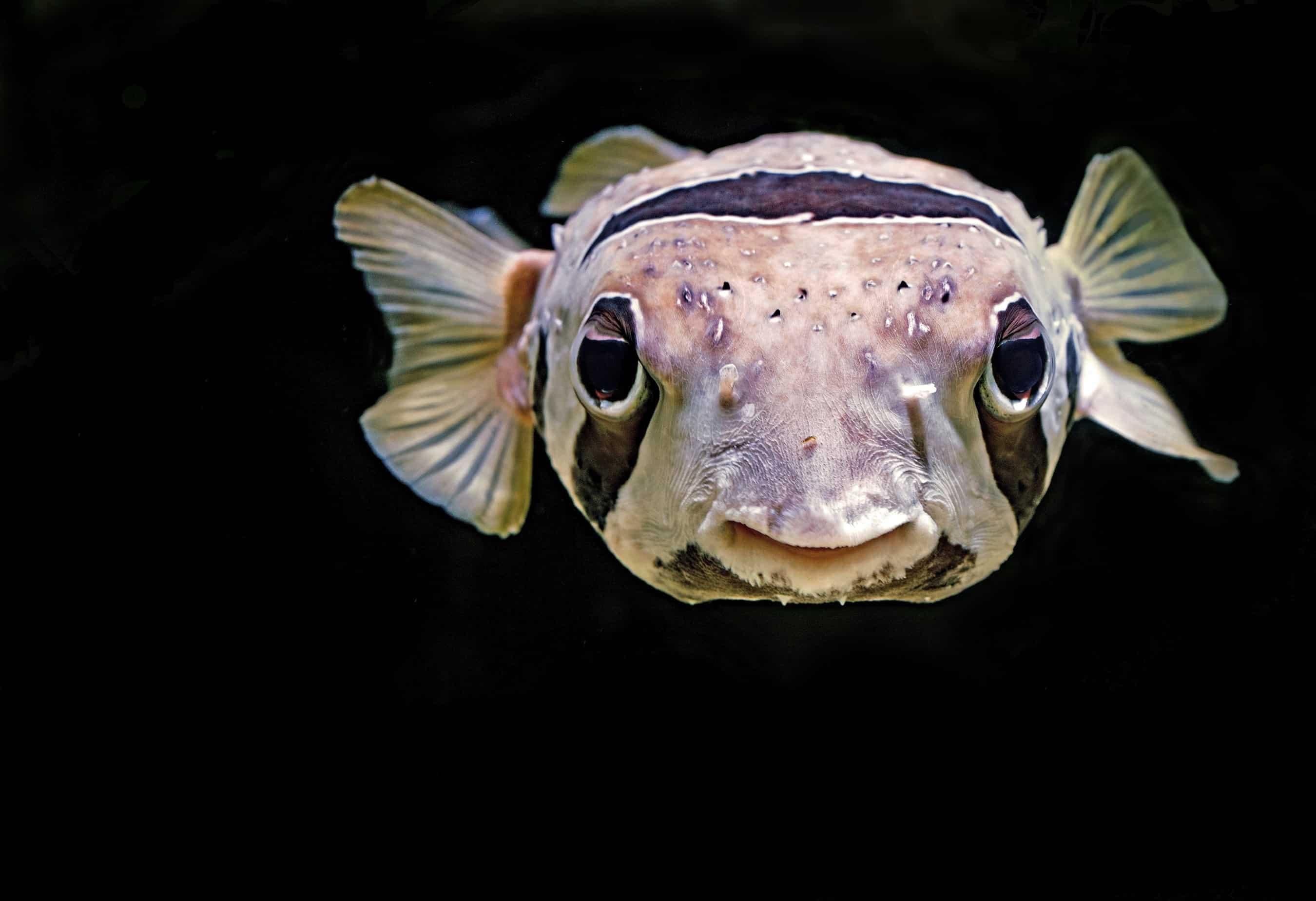 Projet digital : agile(s) comme des poissons dans l'eau